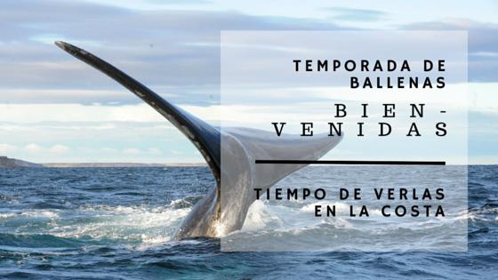 Temporada de ballenas 2016!